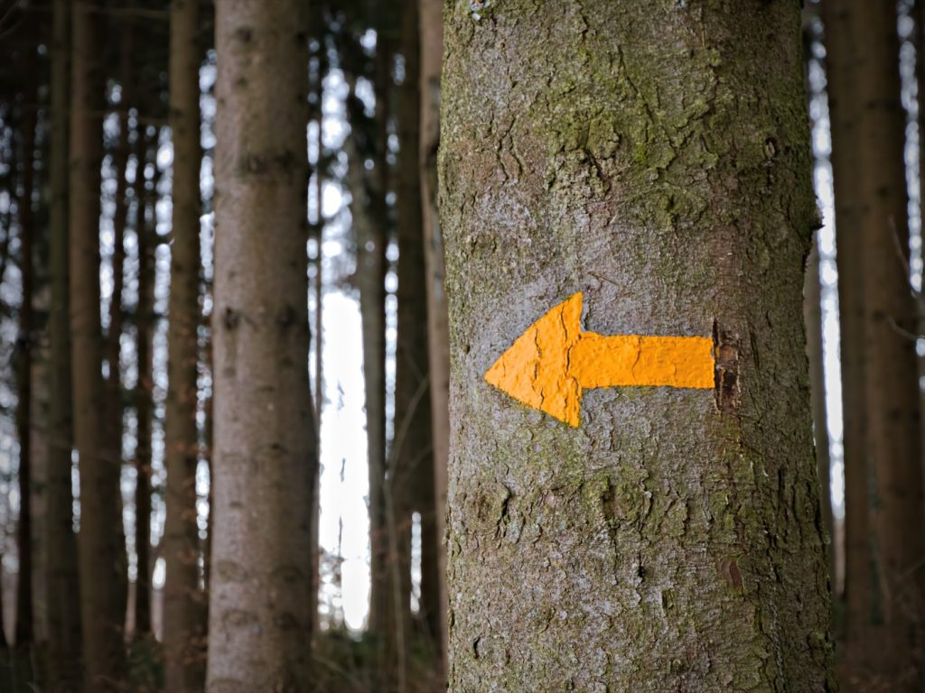 Yellow arrow on a tree to point the way